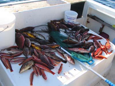 Buena pescata,hecha por pescadores de la Sección, abordo del Pez Espada.
