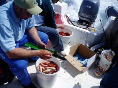 Moncho y Javi,midiendo las piezas de camino a puerto.como se puede apreciar en la foto, los cubos casi llenos